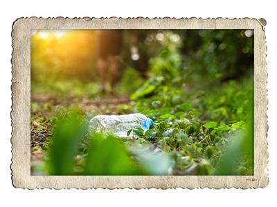 Plastikflasche im Wald