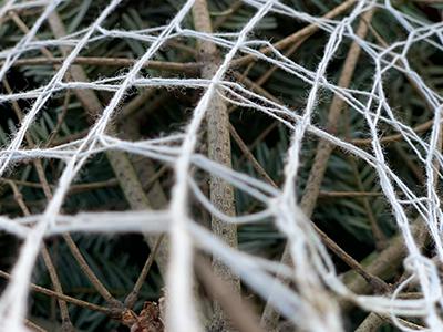 CompoPac-Netz-Baumnetz